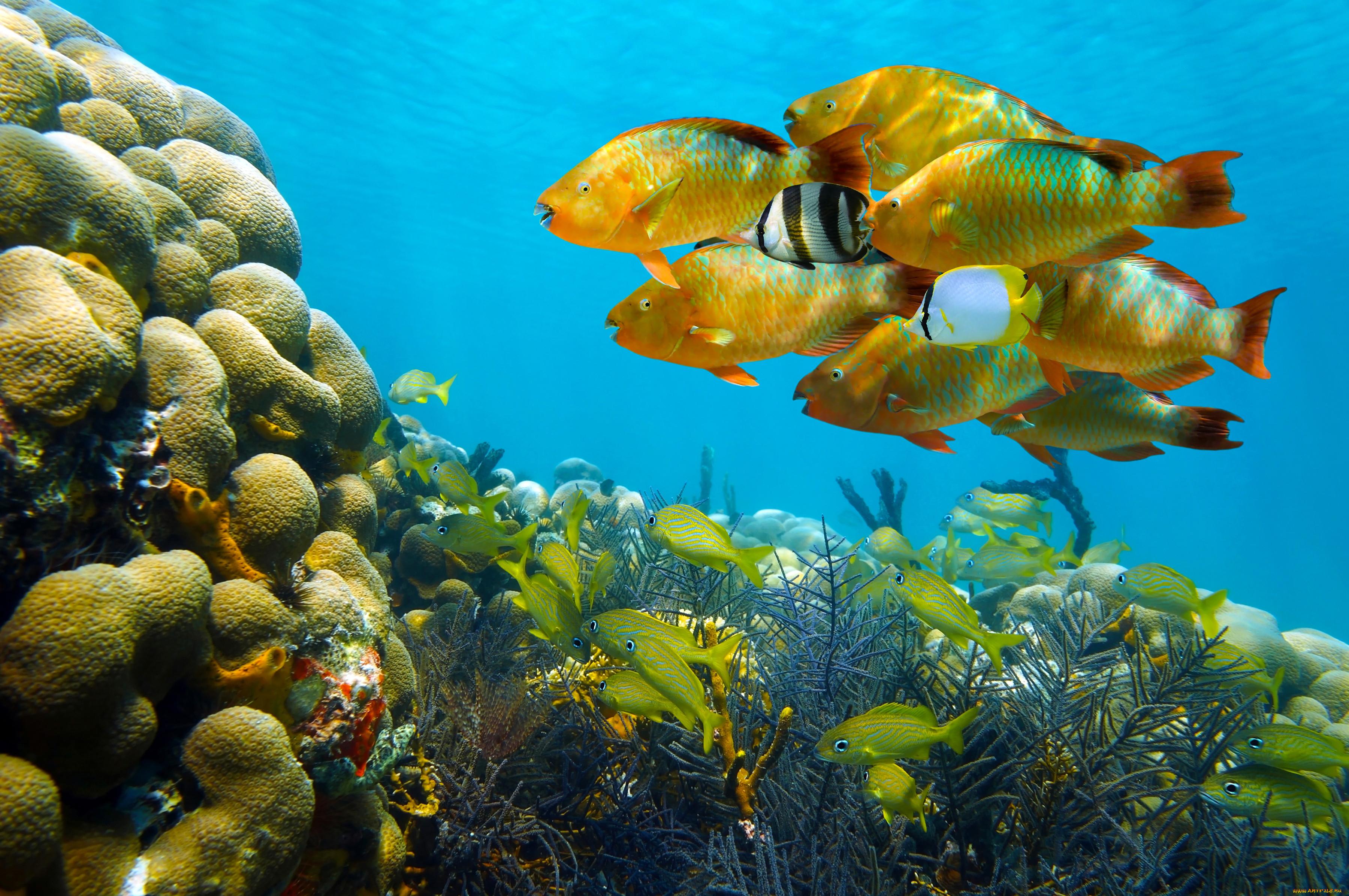 смотреть картинки рыб в море яркая